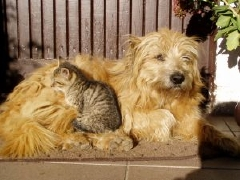 Hund&amp;katt2